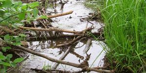 Retirer du cours d'eau les branches et les débris pouvant entraver la libre circulation de l'eau