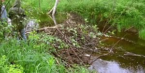 Démanteler un barrage de castors